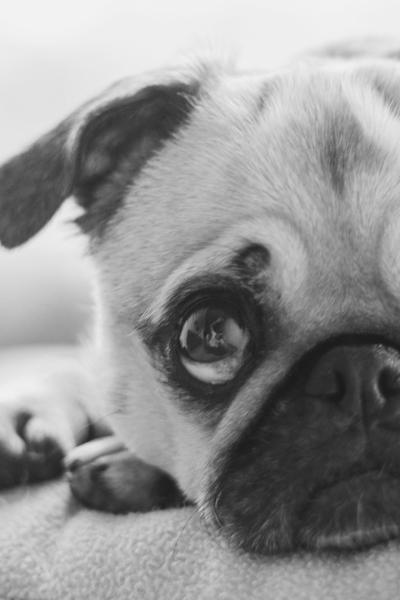 Śmierć ukochanego psa…